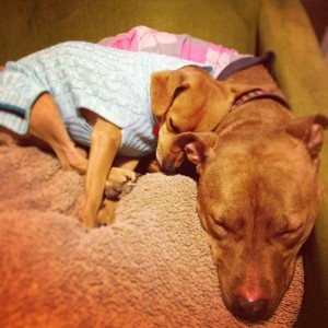 Pitty and Frankie cuddle up in their sweaters