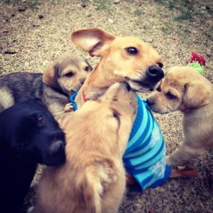 FrankiePuppies_e