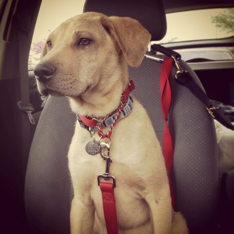 Gypsy dog ops » rudy, rudy, such a cutie!