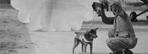 Canine Parachutist