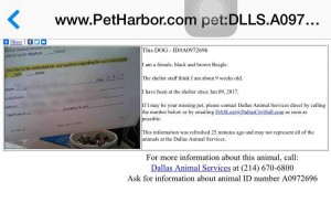 PetHarborPersonalInfo